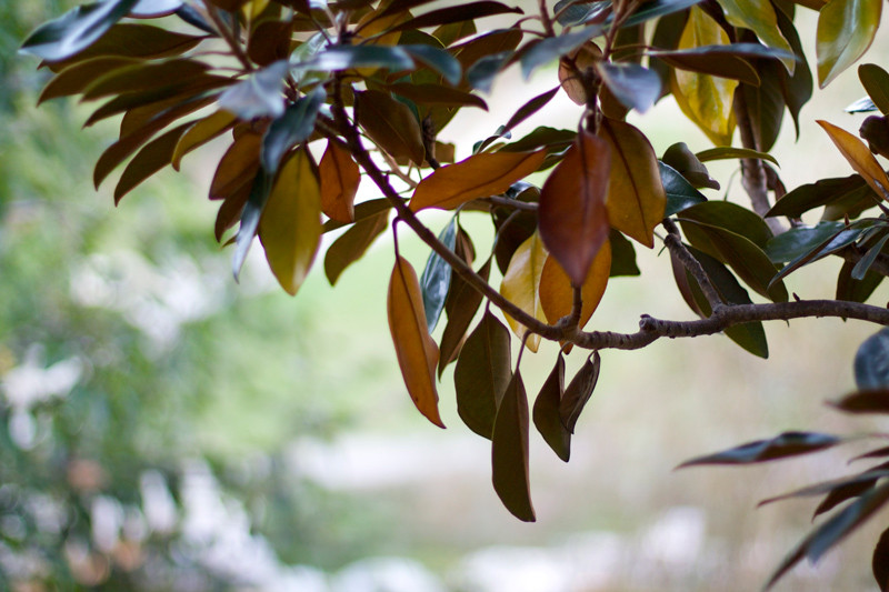 brown-autumn-leaves