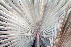 2-fronds
