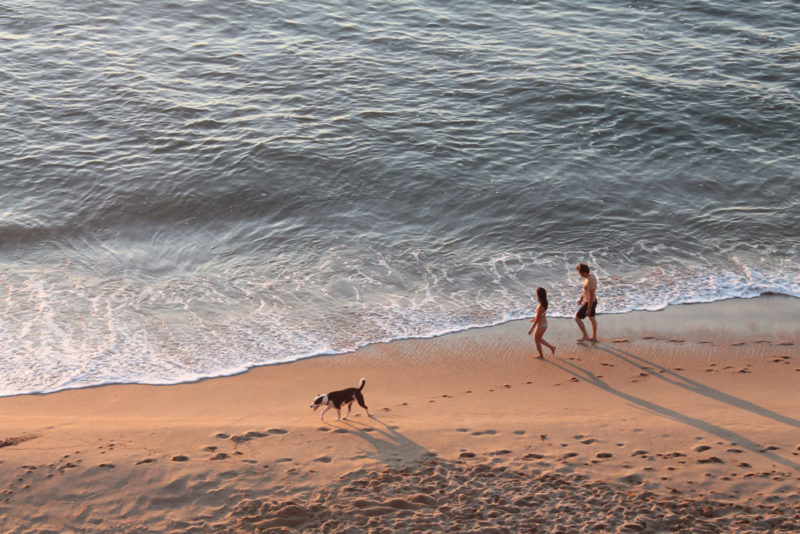 dog-beach-family