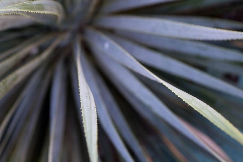 black-plant