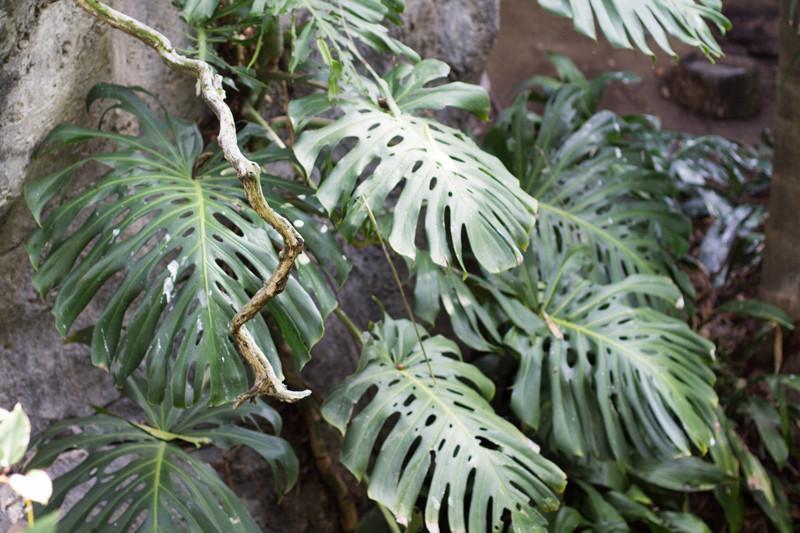 zoo-plants