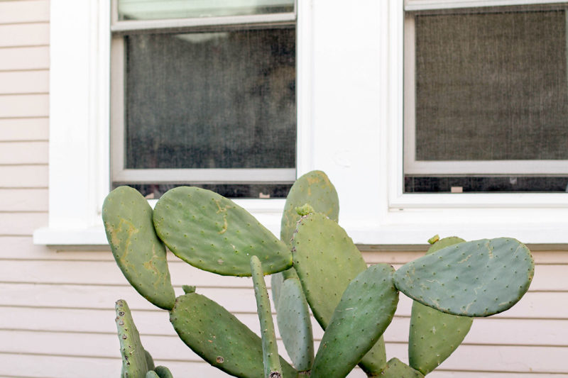 north park bungalow // cactus garden