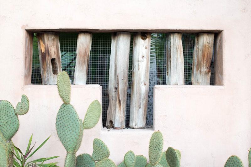 pink-cactus-1
