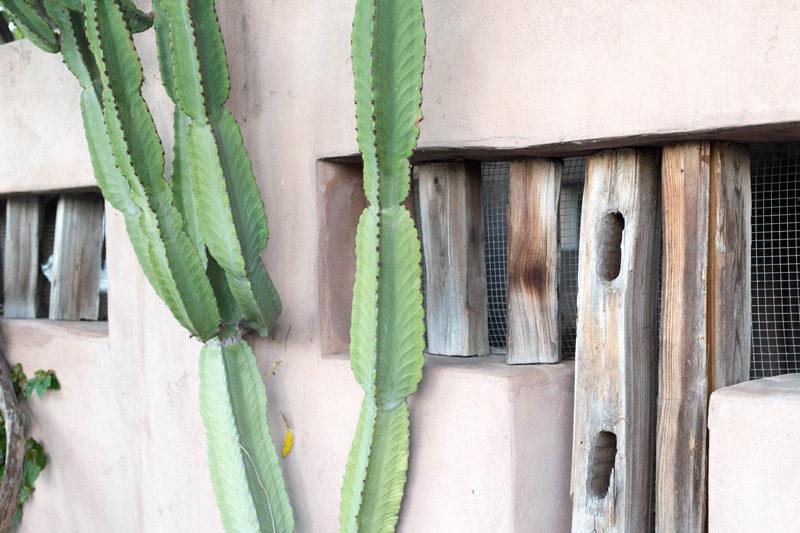 pink-cactus-4