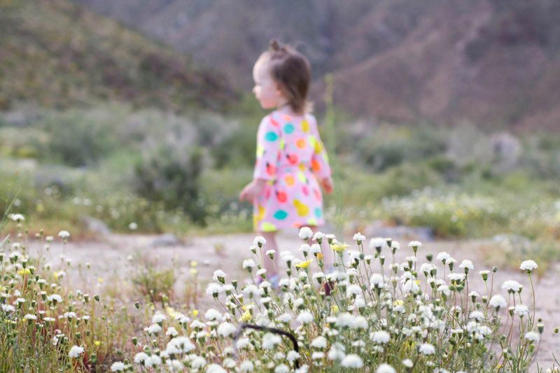 wildflower bryn