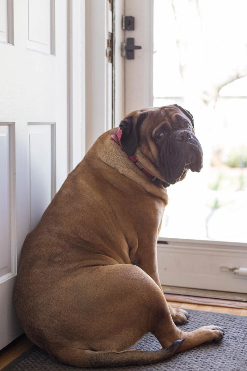 east coast family dog