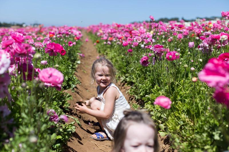 carlsbad flower fields // little girls
