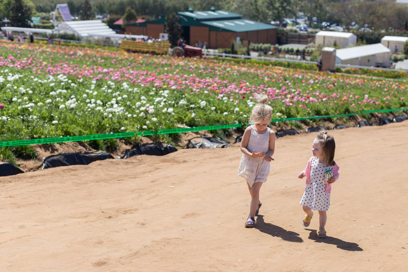 carlsbad flower fields // little ladies