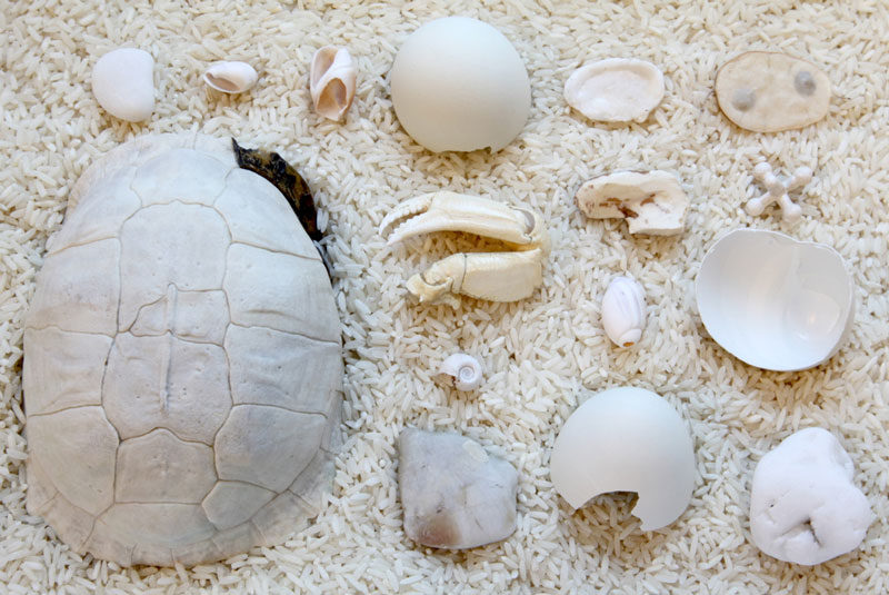 things organized neatly bones + shells