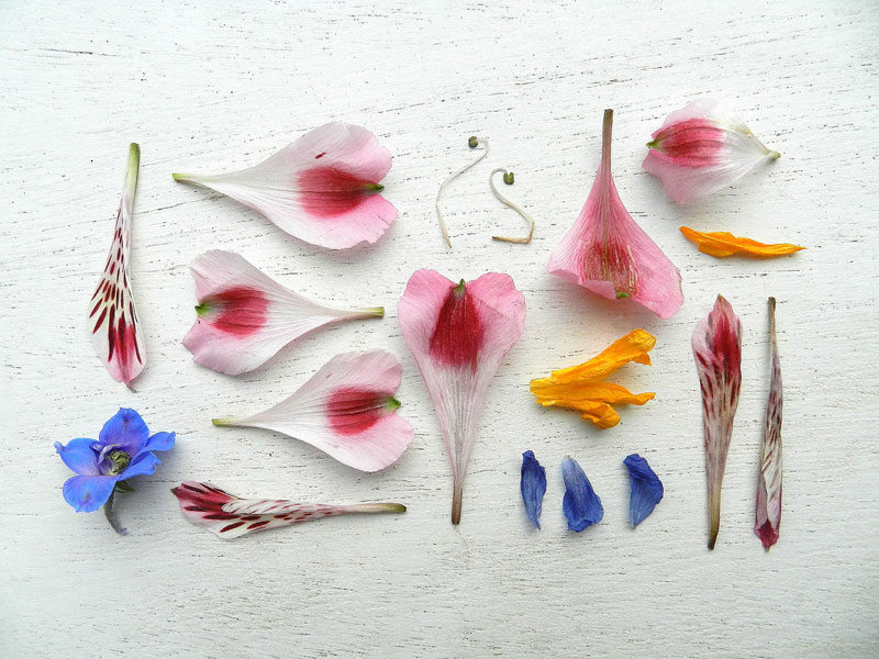 things organized neatly // flower petals
