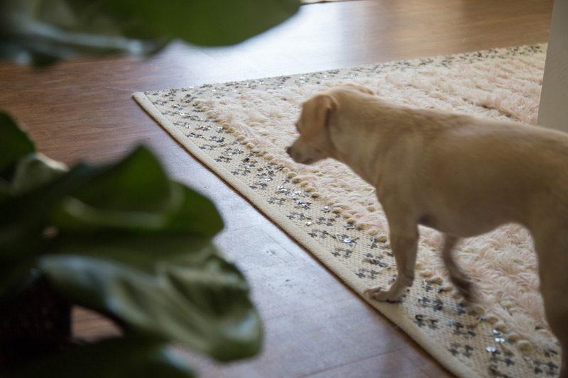 obi, a fiddle leaf fig and a moroccan rug