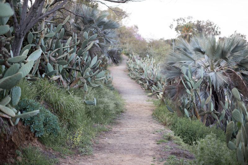 balboa park cactus garden path