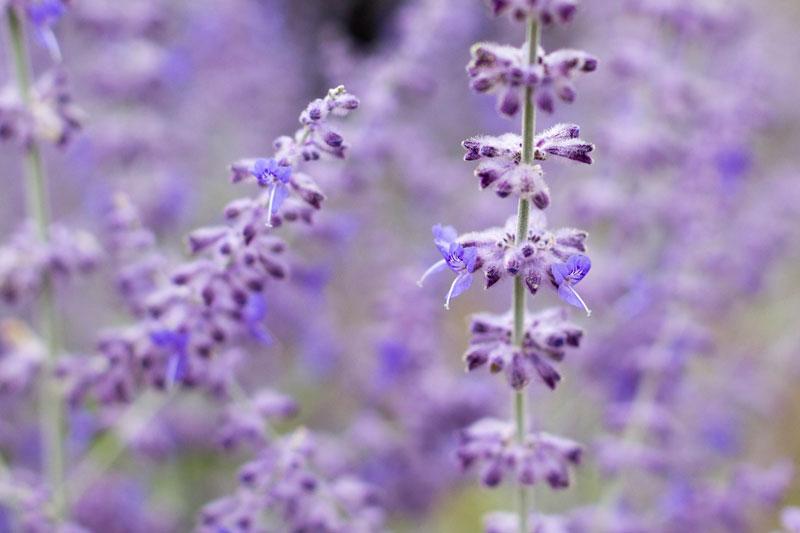 minty-purple-2